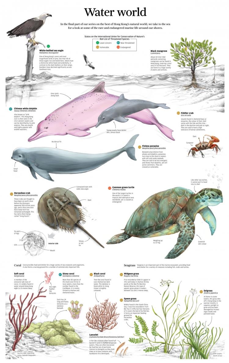 【演界网独家信息图表】扁平化-快要灭绝的哺乳动物